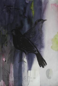blackbird.k